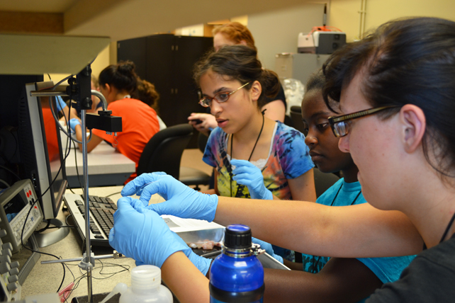 Campers learn about neuromuscular electrical stimulation during a hands-on project involving frog legs.
