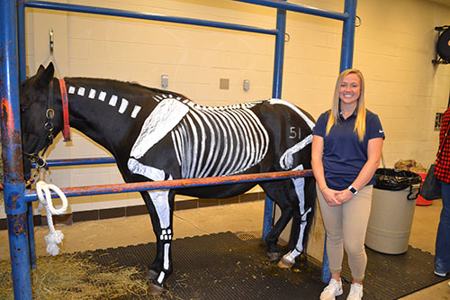 Hannah Miller, an Illinois Vet Med student, with Lucy, the horse, who is demonstrating a horse's skeletal system to Open House visitors.