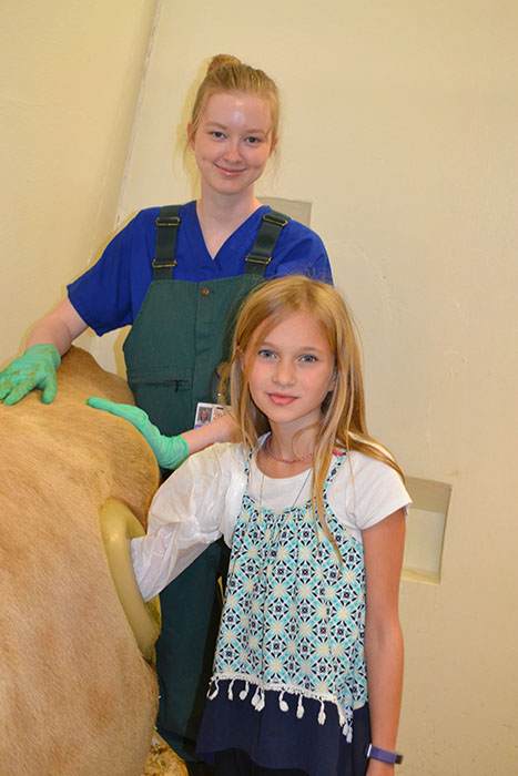 Vet Med student Brittany Stark guides a young visitor as she inserts her arm into a fistulated cow.