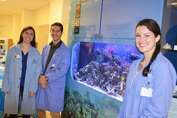 Kathleen Rafferty, Alec Colosi, and Chelsea Ciambrone, who are particularly intrigued by aquatic animals, exhibit the aquatic animals, including the angelfish, in the aquarium on the second floor of the Vet Med Basic Sciences Building.