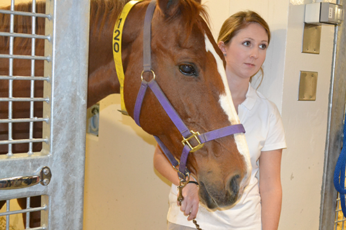 Visitors can interact with animals as large as a horse at the Vet Med Open House.