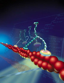 Image of how a cell's biomolecular motor moves. (Illustration by PrecisionGraphics.com)
